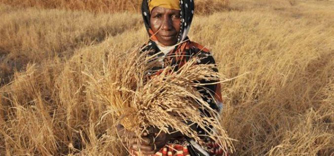 Извештај на ФАО за состојбата на храната и земјоделството