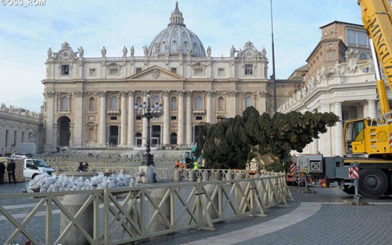На плоштадот Свети Петар пристигна божиќното дрво