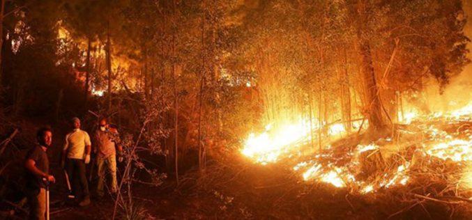Солидарност на Папата со настраданите во пожарот во Чиле