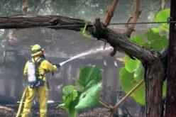 Папата изрази солидарност и сочувство со погодените од пожарите во Калифорнија