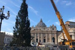 Божиќното дрво пристигна на плоштадот Свети Петар