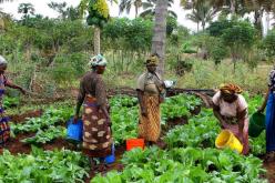 Порака на папата Фрањо по повод декадата на ОН за семејно земјоделство