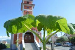 """Најава: Во недела црквата """"Раѓање на свети Иван Крстител"""" во Струмица ќе го прослави својот заштитник"""