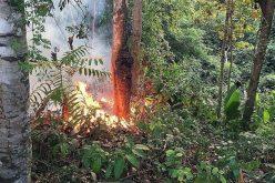 Латиноамериканските епископи бараат помош за гаснење на пожарите