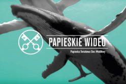 Молитвена накана на Папата за септември: Заштита на морињата и океаните (Видео)