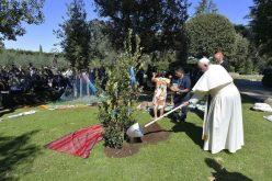 Во Ватиканските градини папата Фрањо засади даб од Асизи
