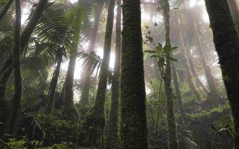 Филипинска бискупија засади 60.000 стебла во еден ден