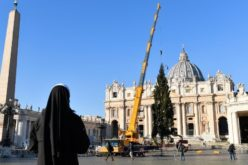 На ватиканскиот плоштад поставена словенечка смрека