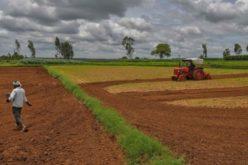 Кардинал Турксон: Иднината е во автохтоните системи за храна